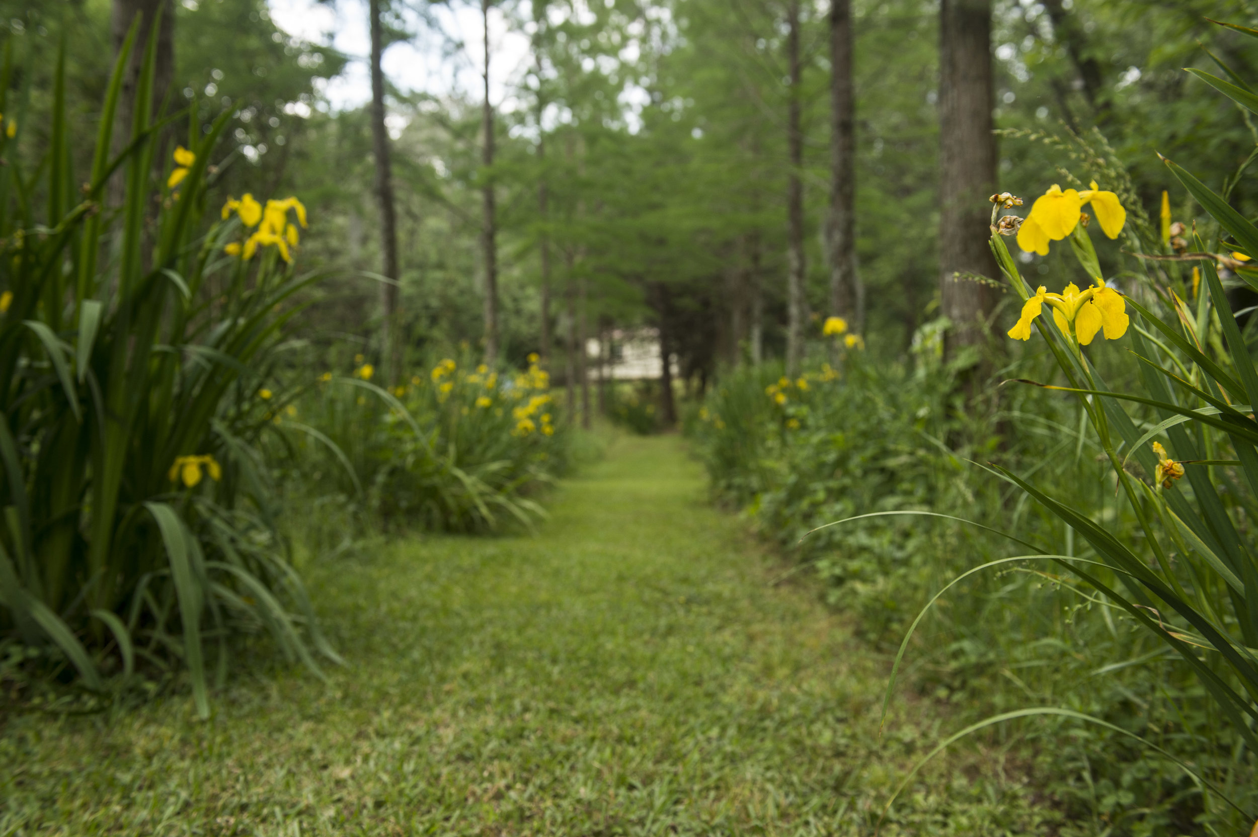 Garden-lined pathways