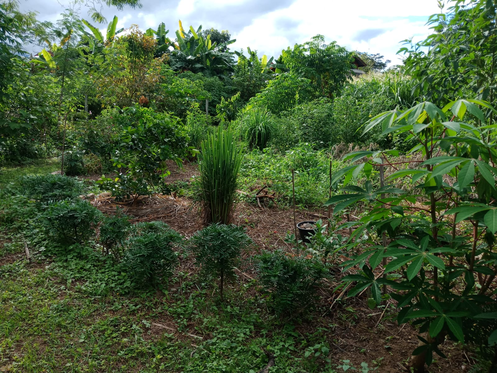a food forest (4).jpg