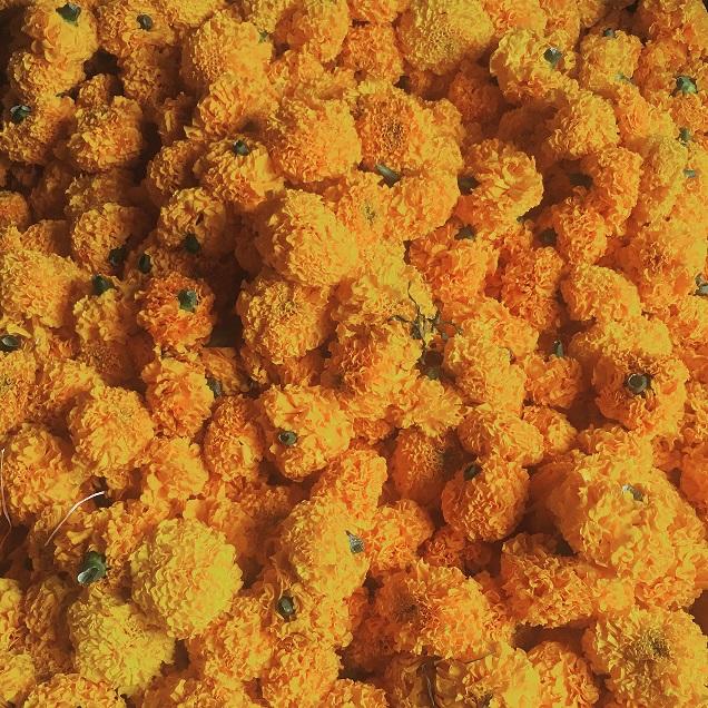 marigolds s.jpg