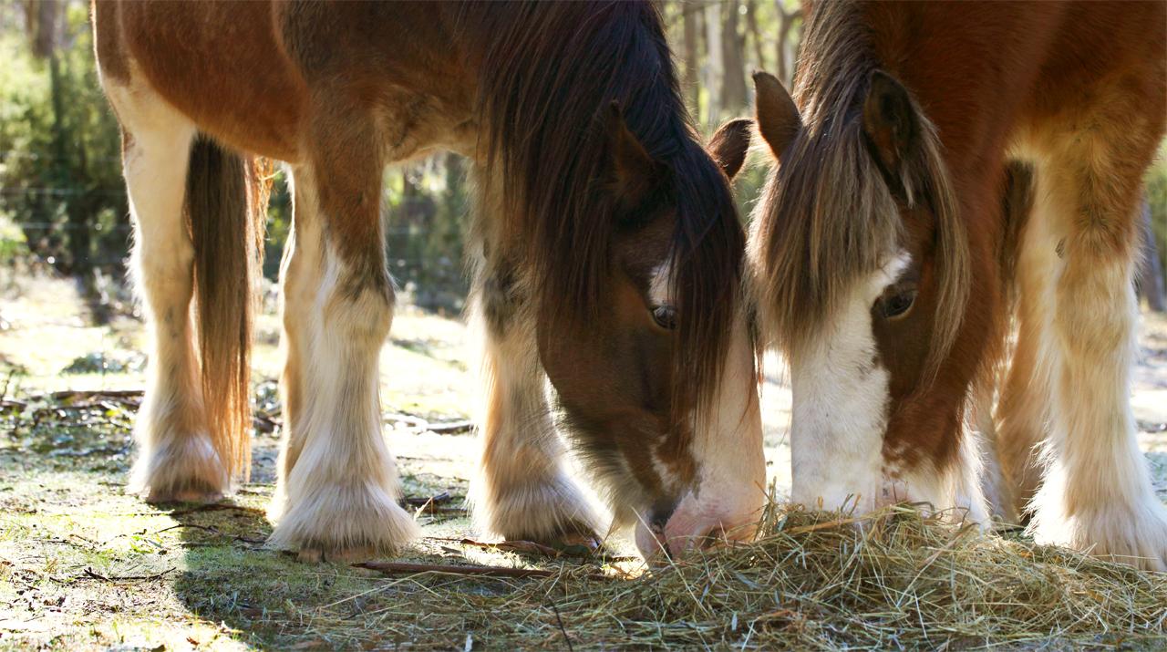 horses feeding - brainsick productions.JPG