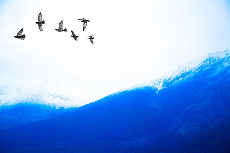 Wing Bound Travellers.jpg