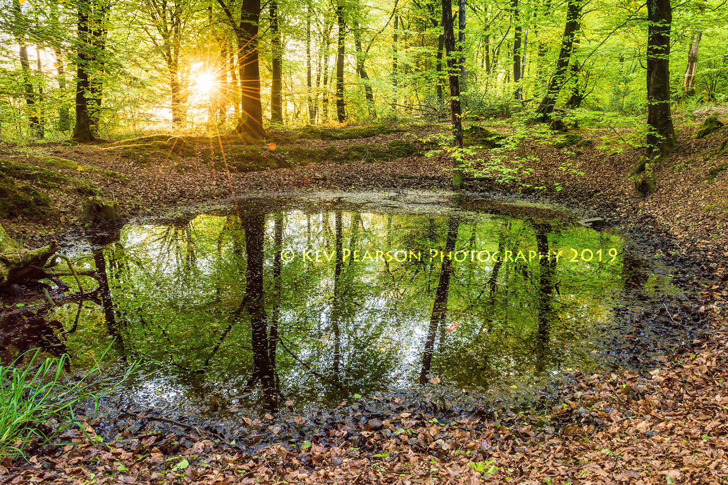 The Faerie Pool -