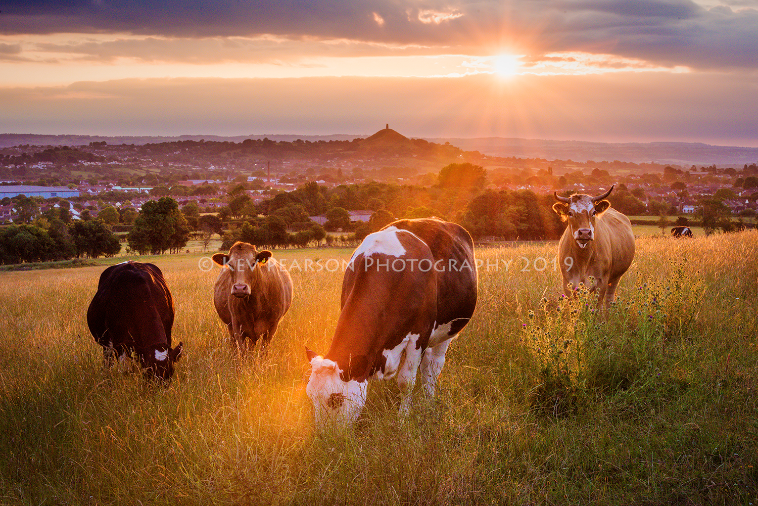 Summer Grazing -