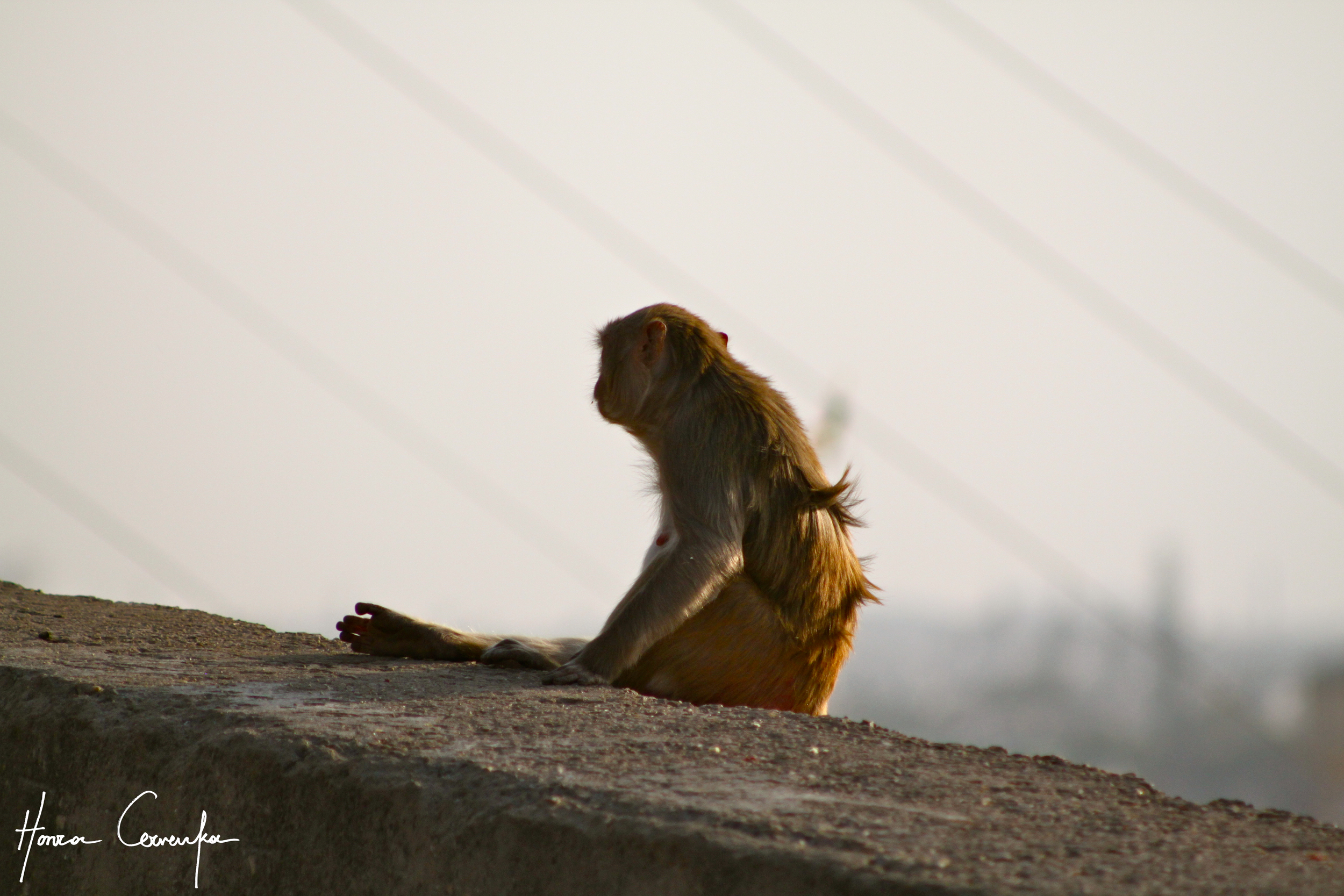 Jaipur, India, 2011