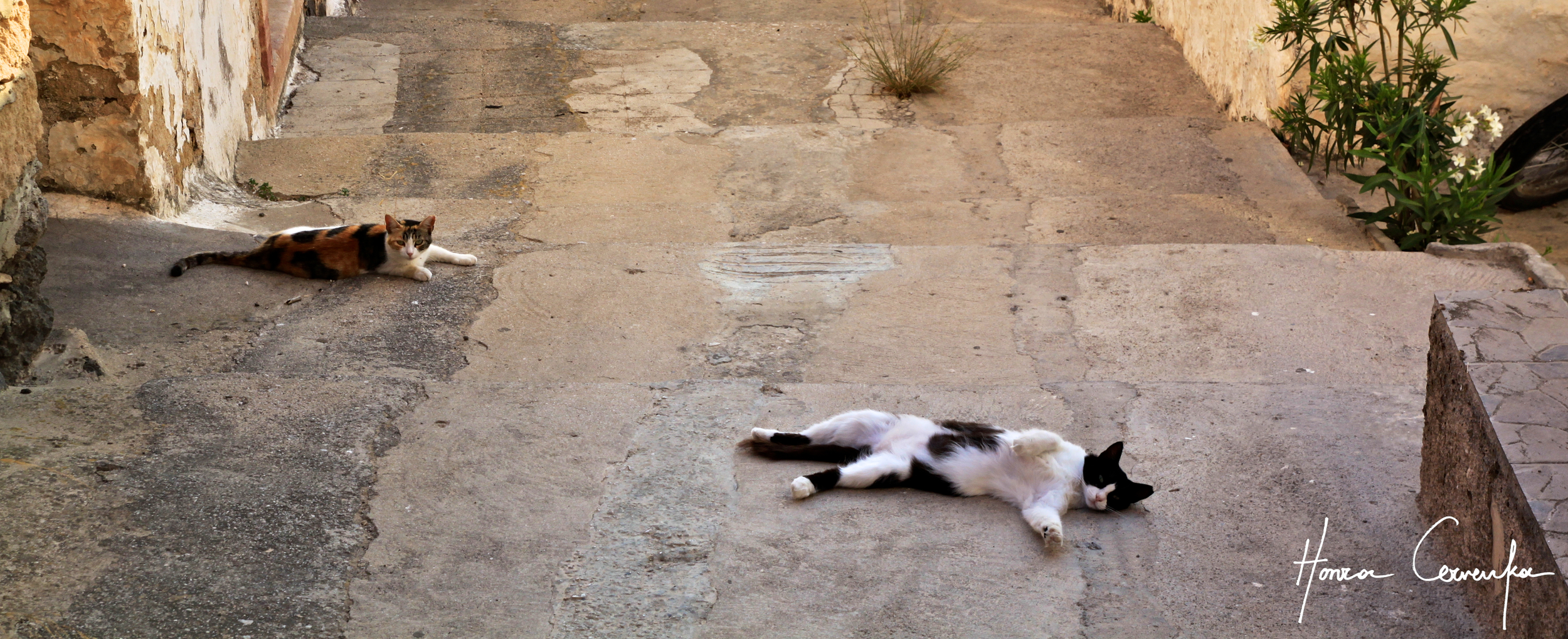 Greek cats at the height of their activity