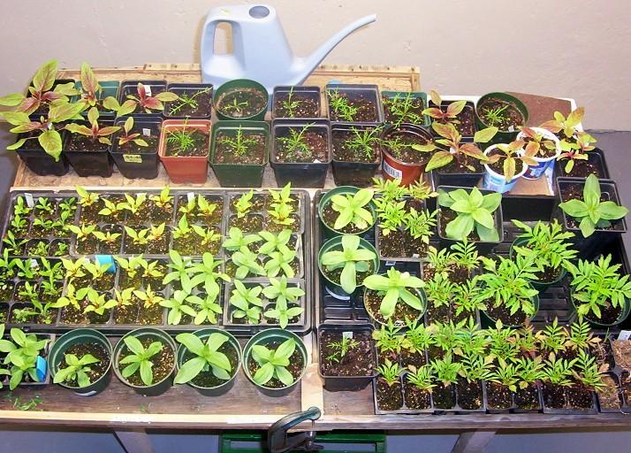 seedlings-4-29-08.jpg