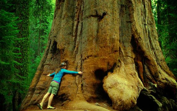 Featured-Images-sequoia