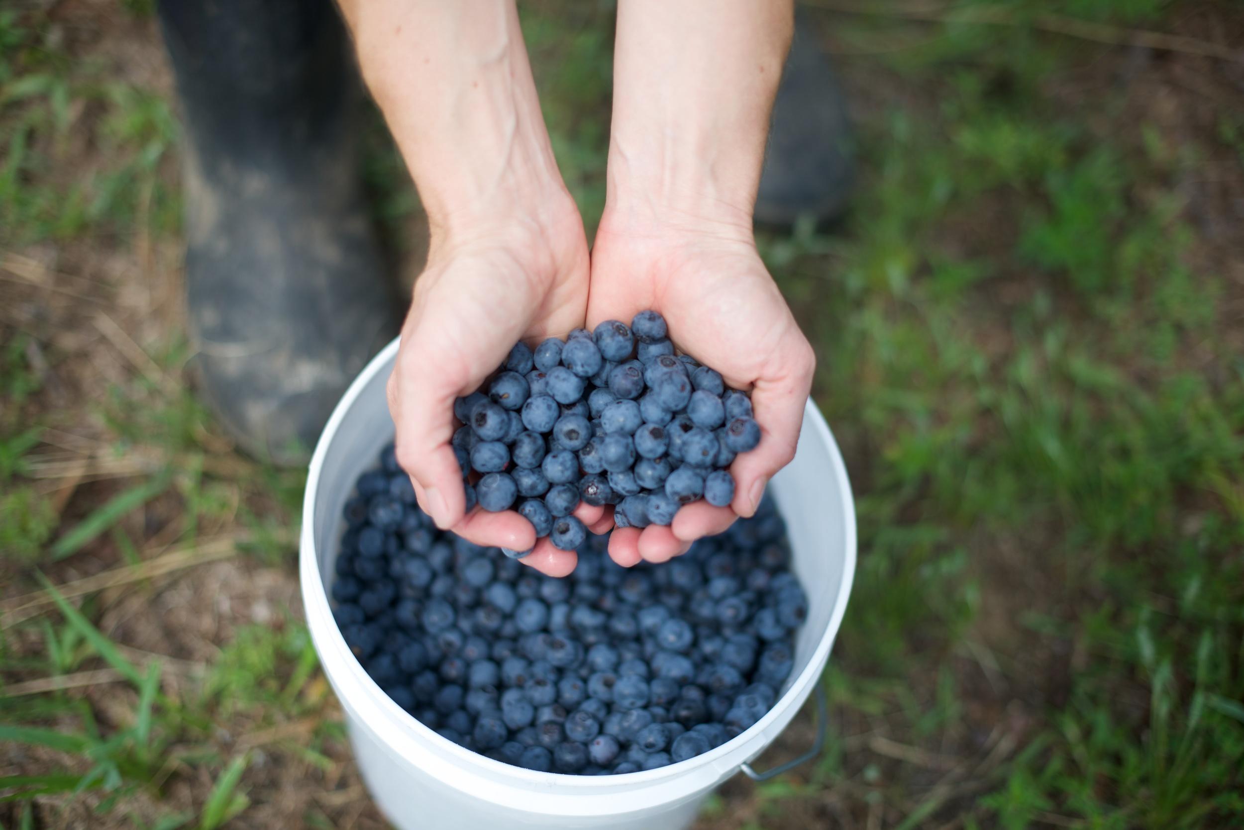 blueberries_14_12