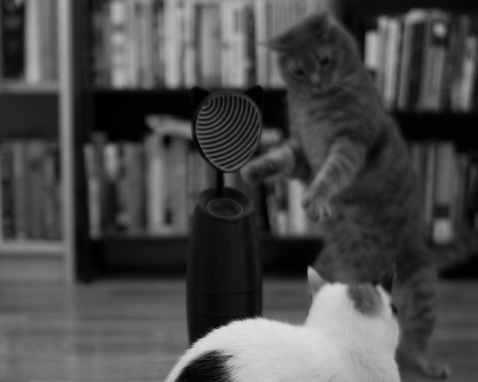 kitty_4.jpg