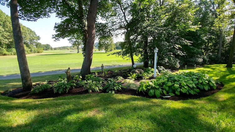 A shade garden focusing on perennials with various shades of green, yellow and blue foliage.