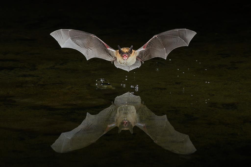 bat_forbes_7dw10.jpg
