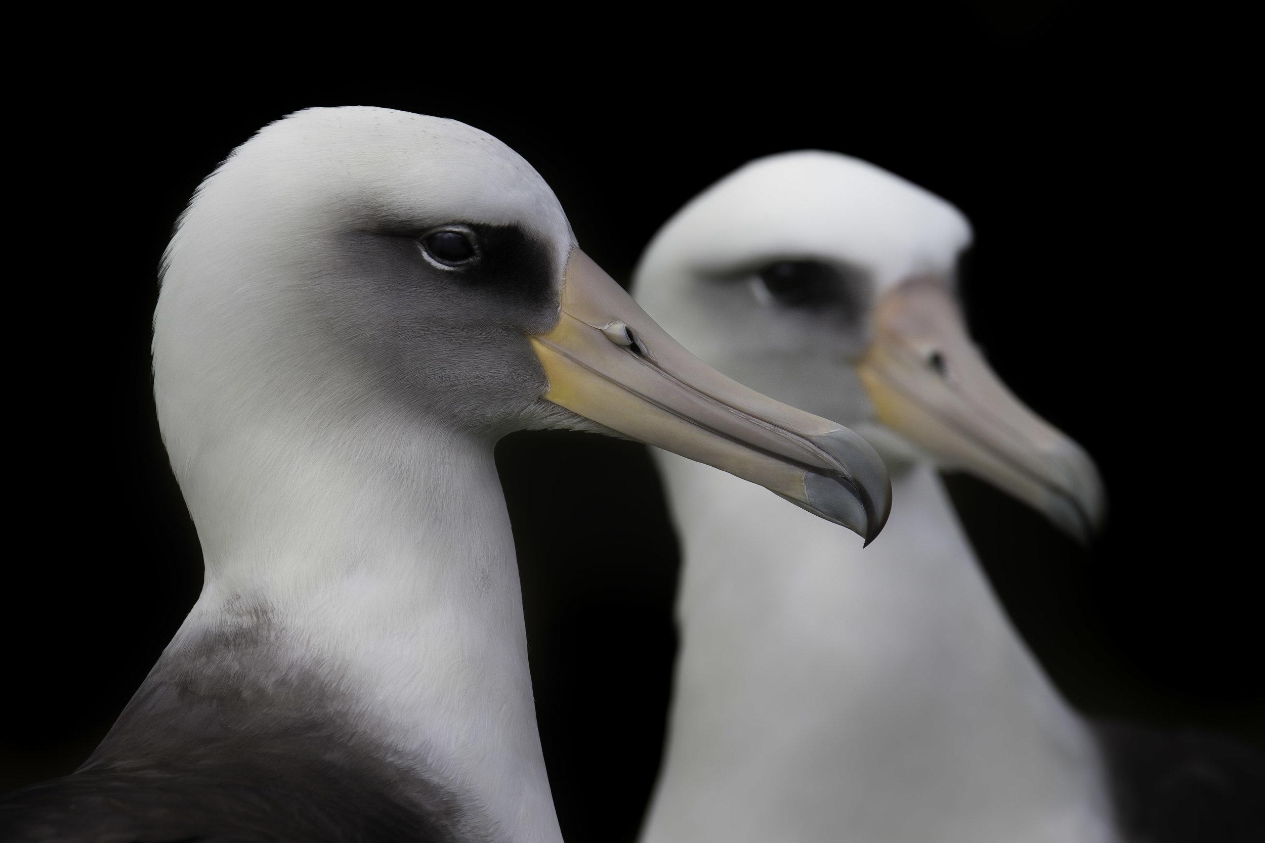 albatros_AE2R0964-2.jpg
