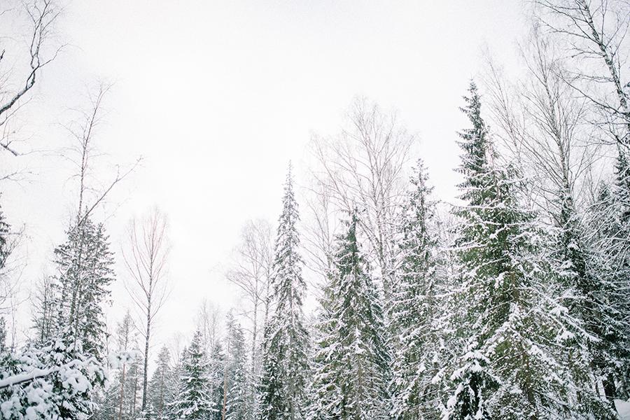 A winter gathering in Nuuksio, Hawkhill Nature, Hey Look, Tuulia Talvio (8).jpg