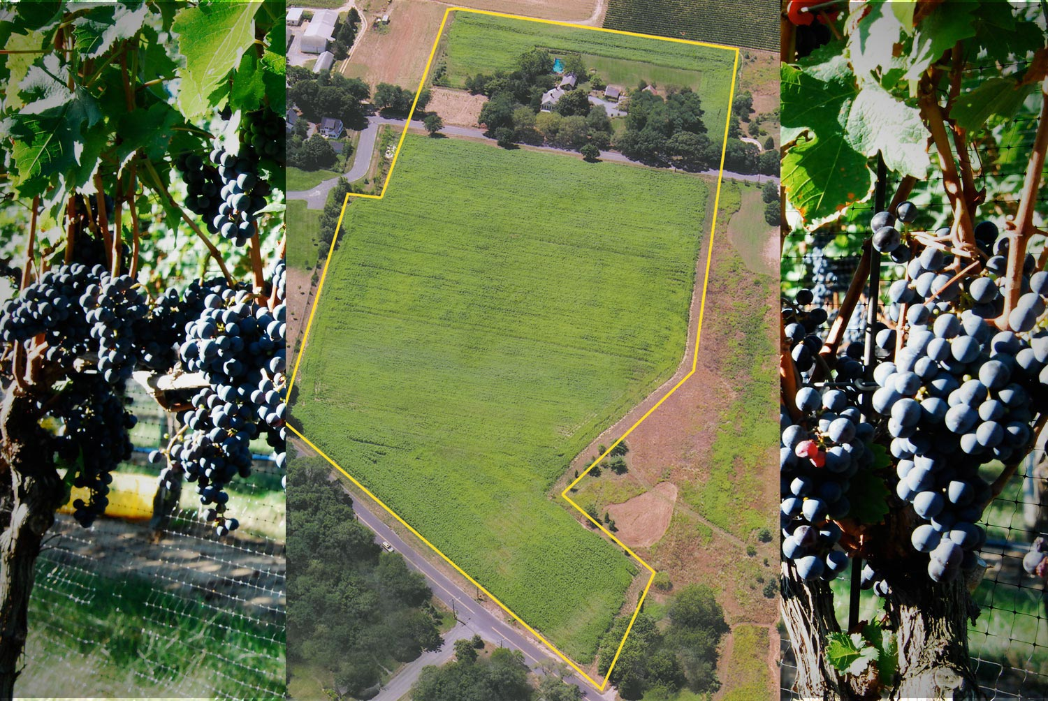 VineyardMap2_web.jpg