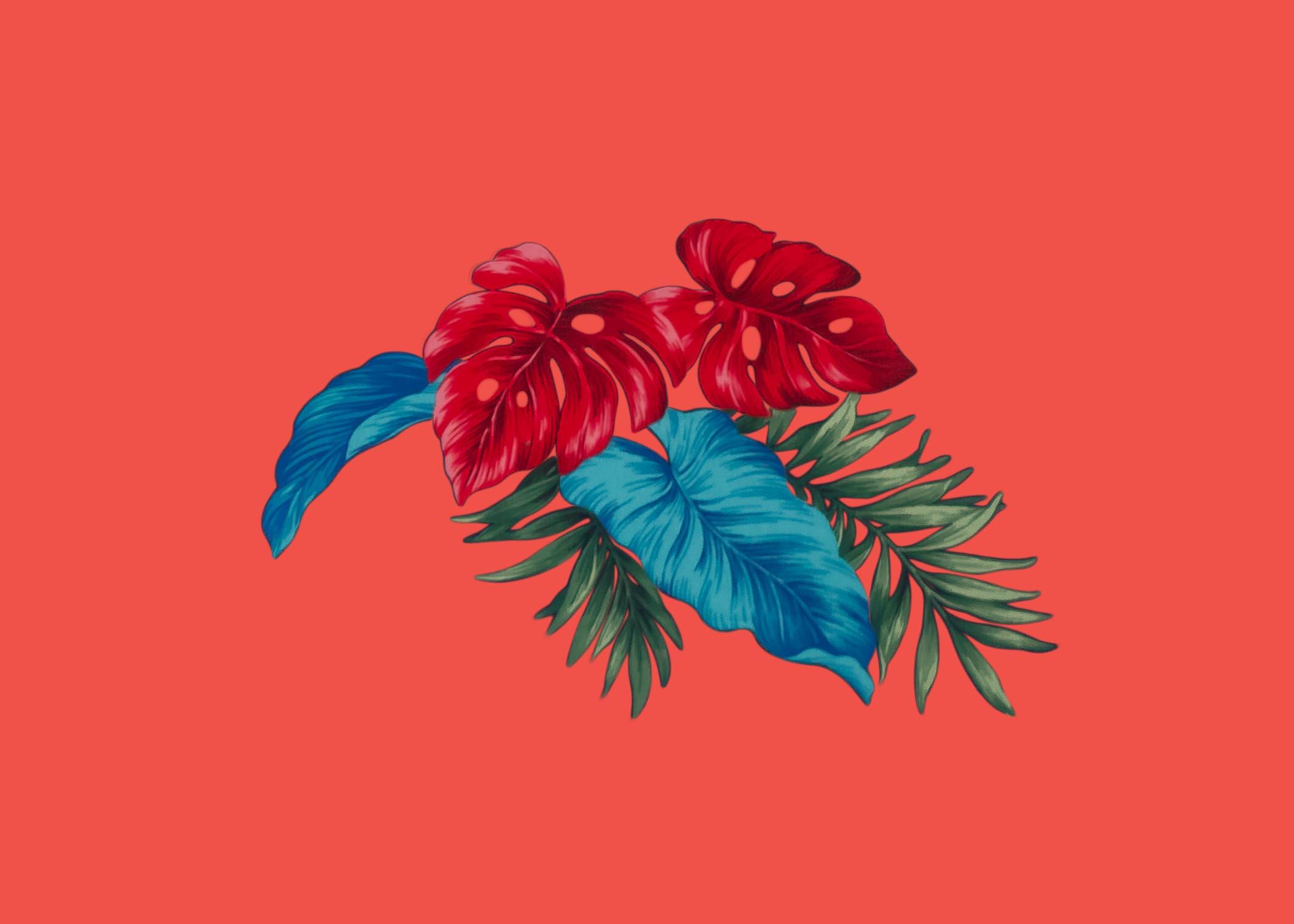 siboney flower 2.jpg
