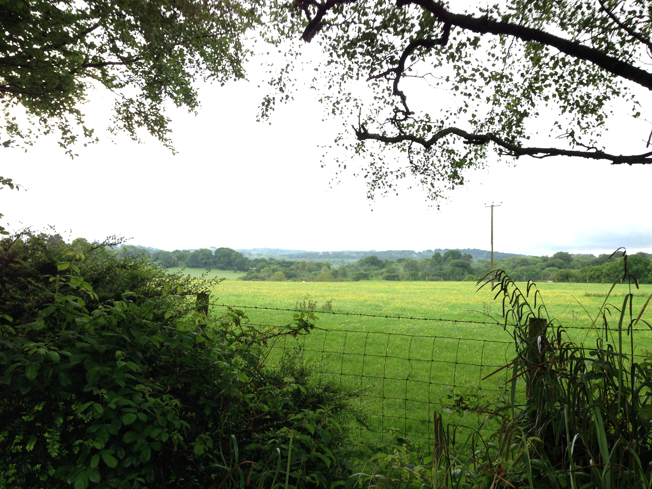 the whole weekend rained but the countryside was lush and calming, I loved it here!