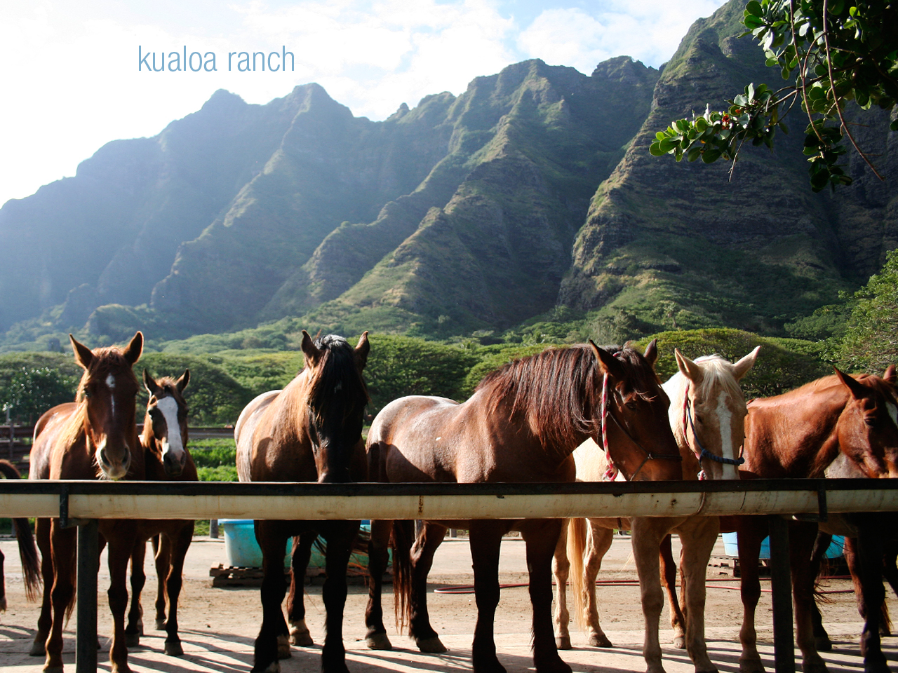 After a few more stops, one at a temple and one at a local macadamia nut farm (best coffee!) we took a quick stop at Kualoa Ranch- abeautiful ranch tucked right next to the mountains along the North Shore where you can take horseback or four-wheeler tours throughout some famous filming grounds (cough Jurrasic Park, cough Lost).