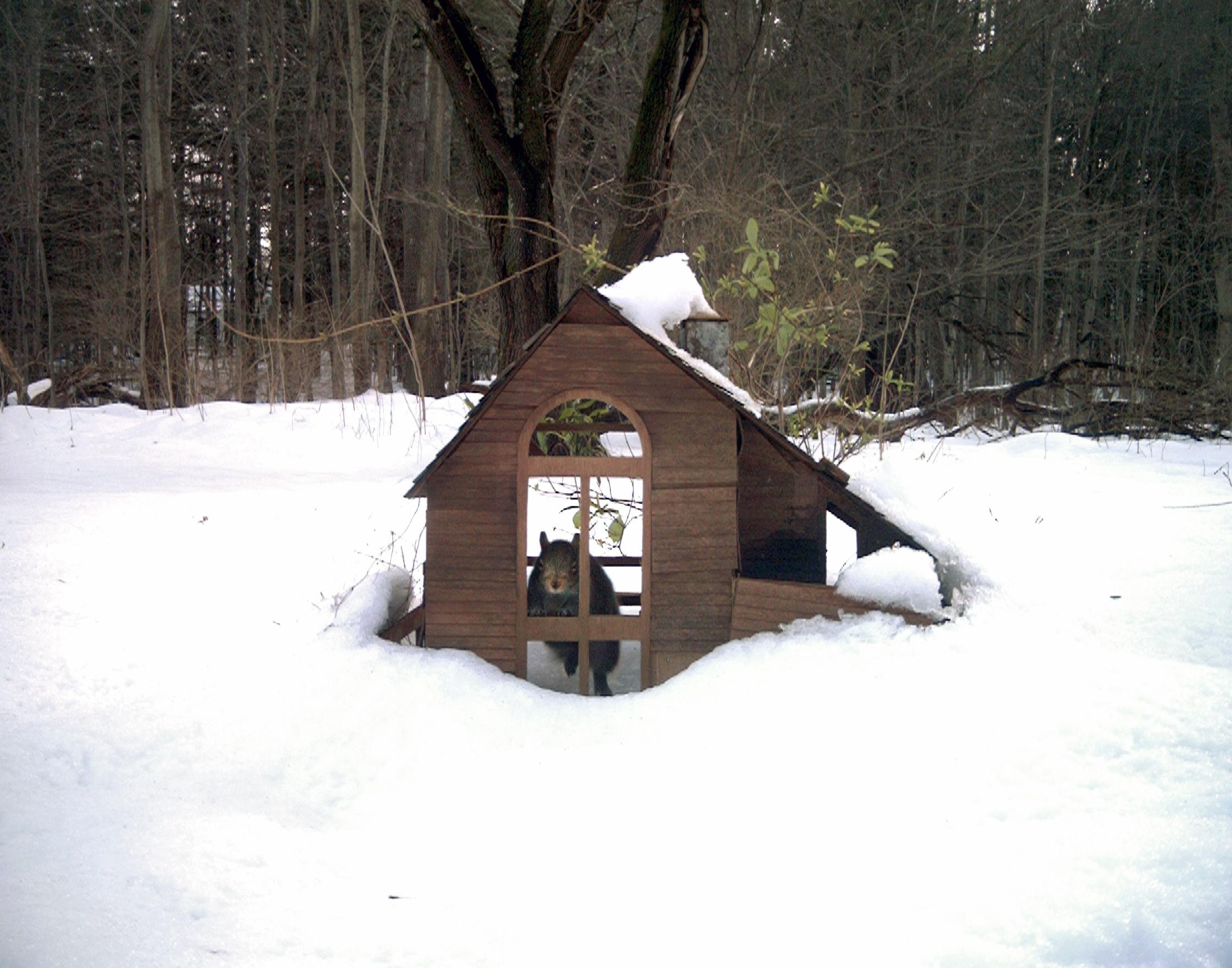 snow_squirrel.jpg
