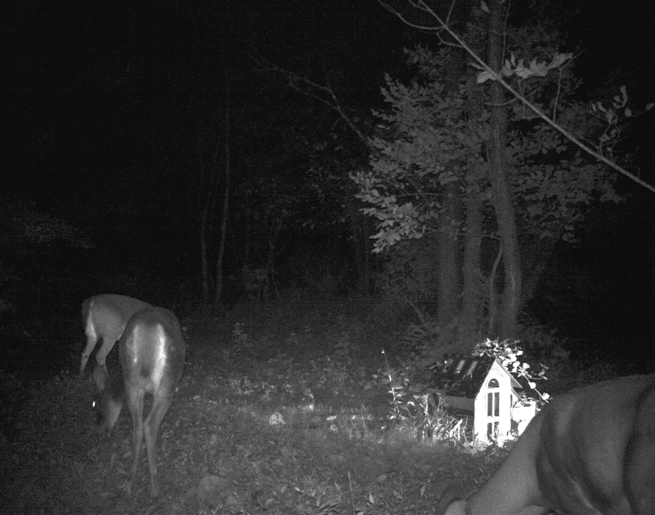 night_deer.jpg