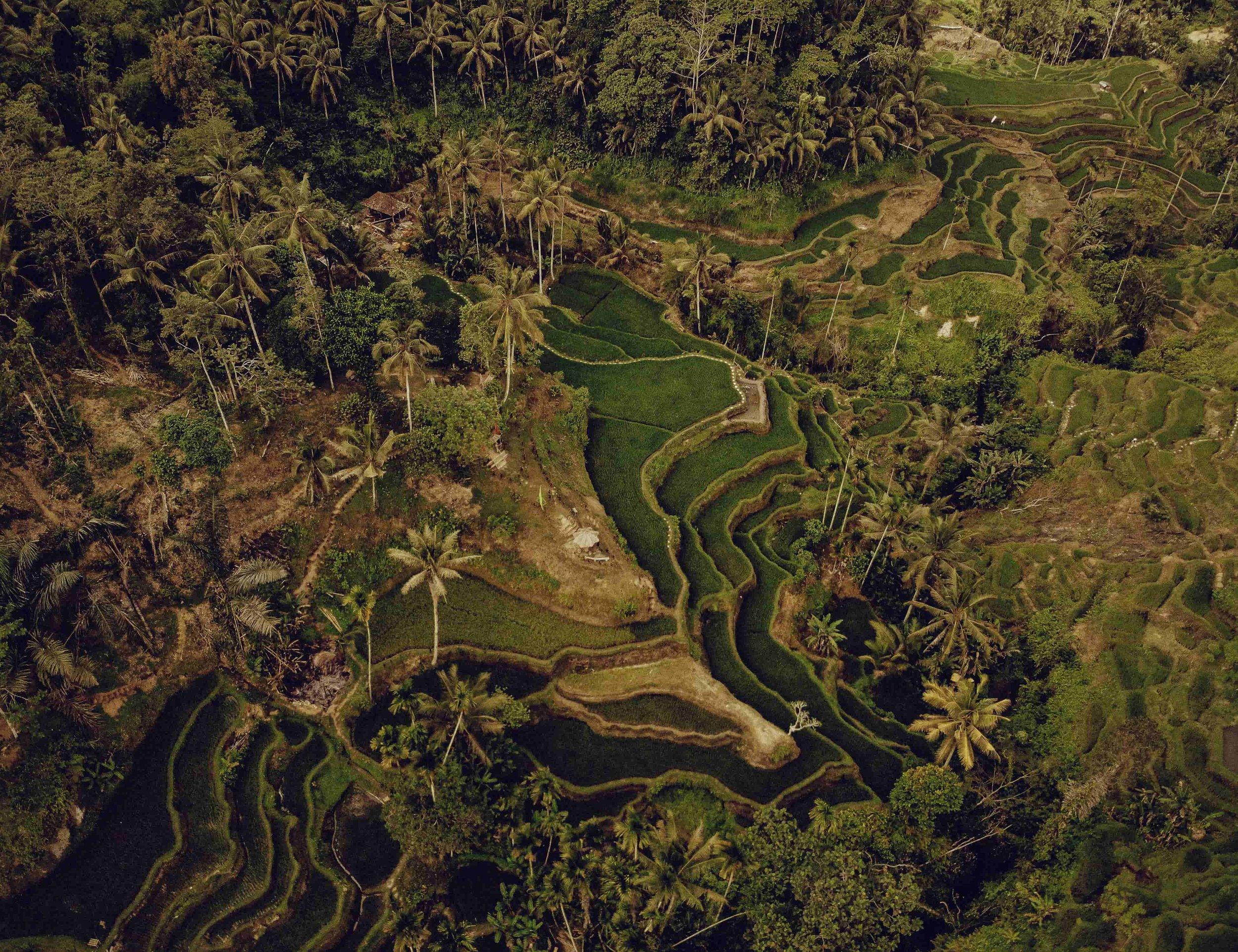 BaliRiceTerraces_LandscapePhotographyByMarcusMeisler.JPG