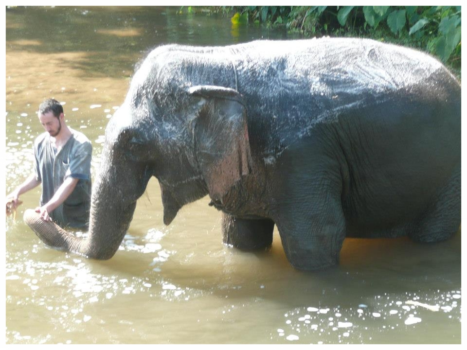 Elephant in Thai.jpg