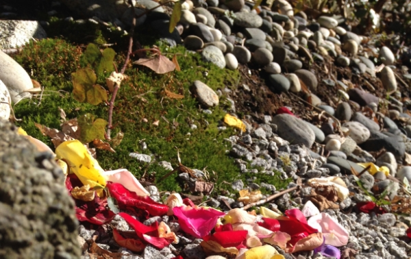The garden hill petal trail