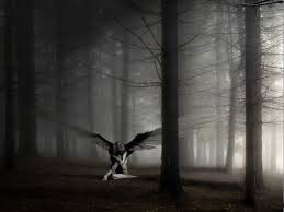 Angelic black, silver grey photography.