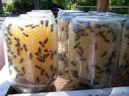 Beeswax Living Jars.