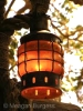 An Tree Lantern, with its organic shape of the bee hive and warm honey glow.........to light the way to your dreams.   Photo by MeganBurgess