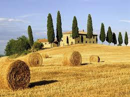Tuscany, a rich source of buttery golden yellows.