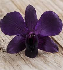 Exotic Purple Orchid