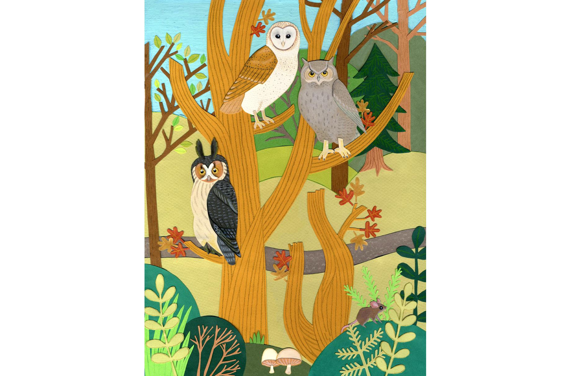 barn__great_horned_long_eared_owl_illustration.jpg