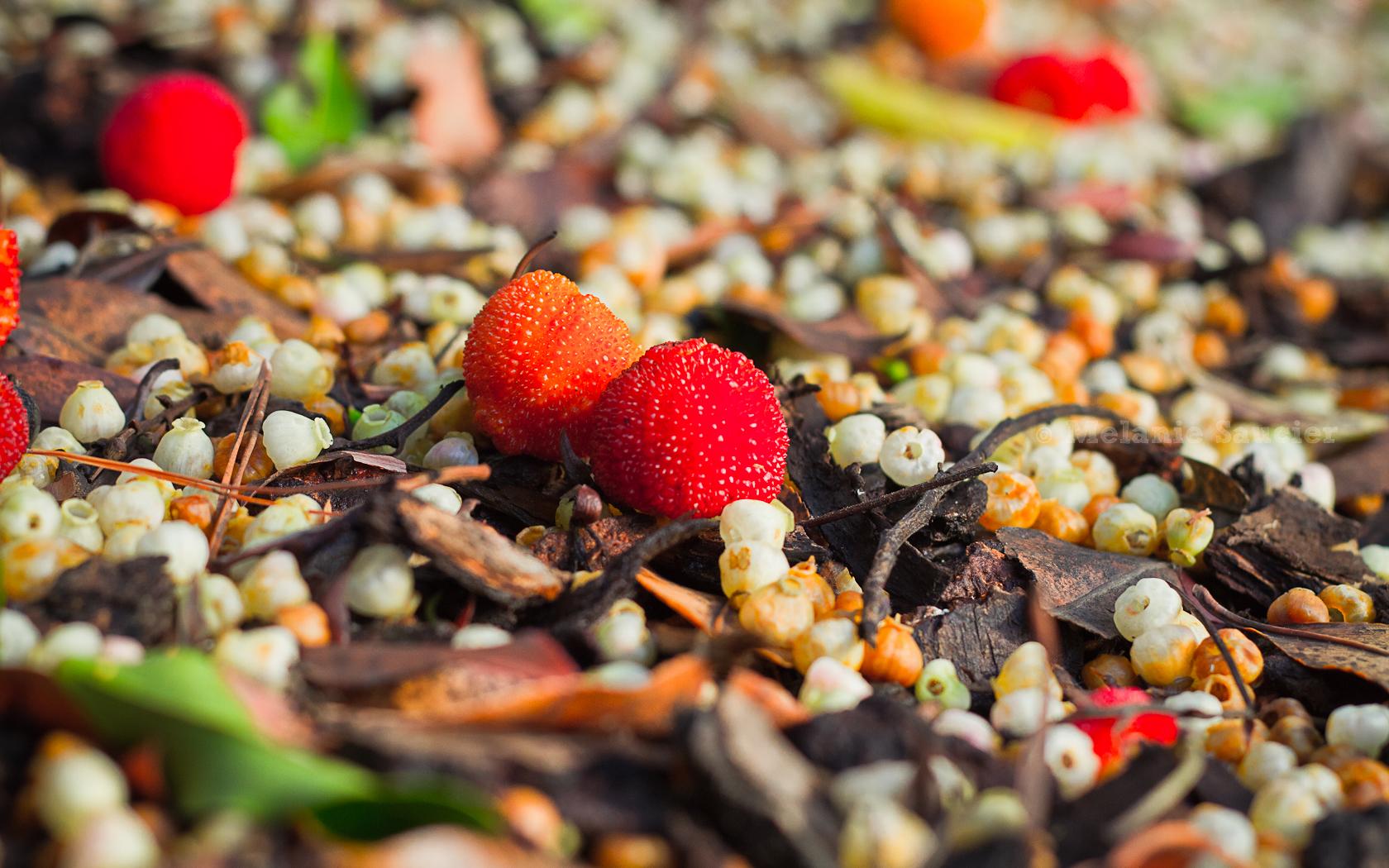 Strawberry-Tree_1680x1050