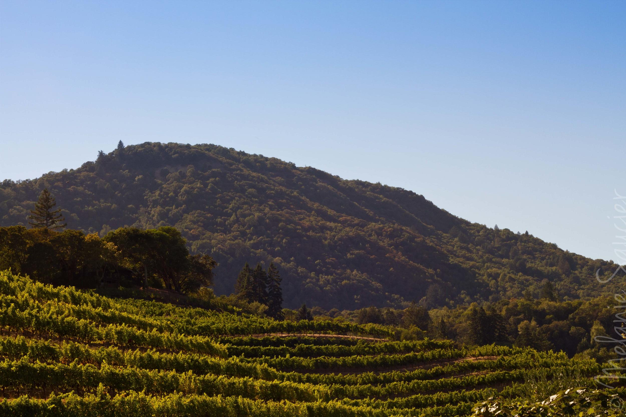 Benziger Winery