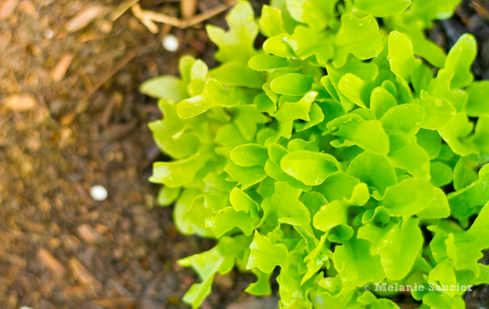 Salad_1900x1200