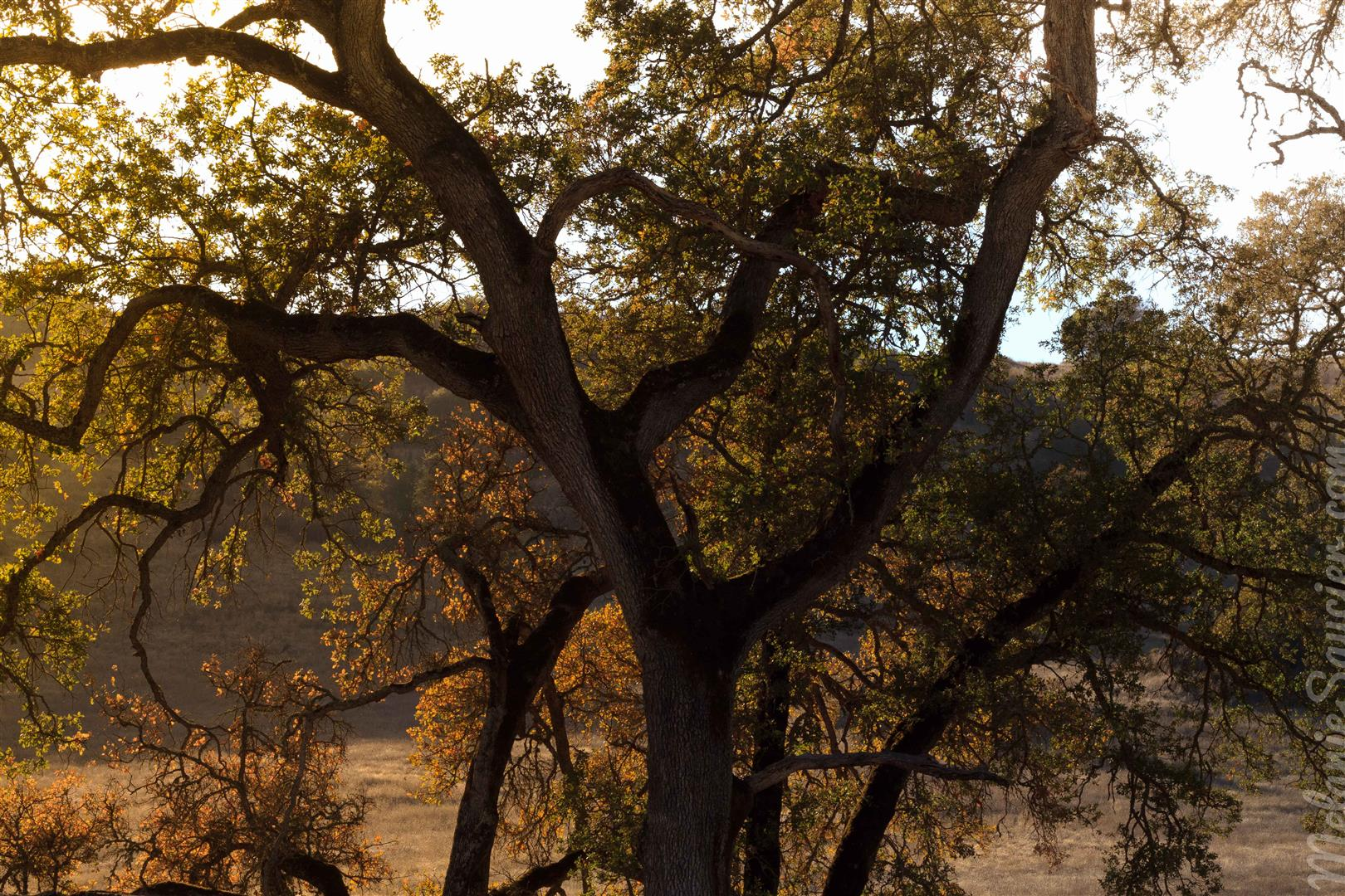 california cronan ranch (1)