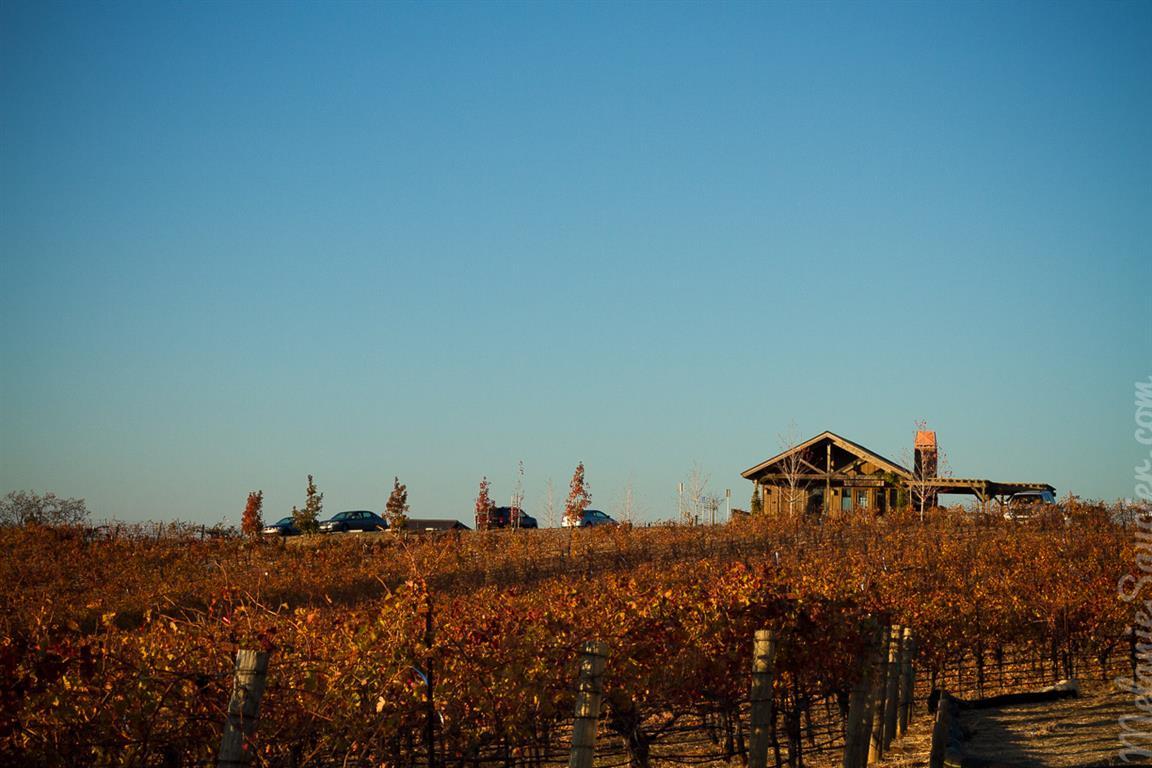 Skinner Vineyards