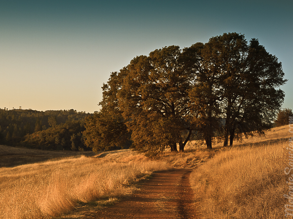 Cronan Ranch Trail_iPad