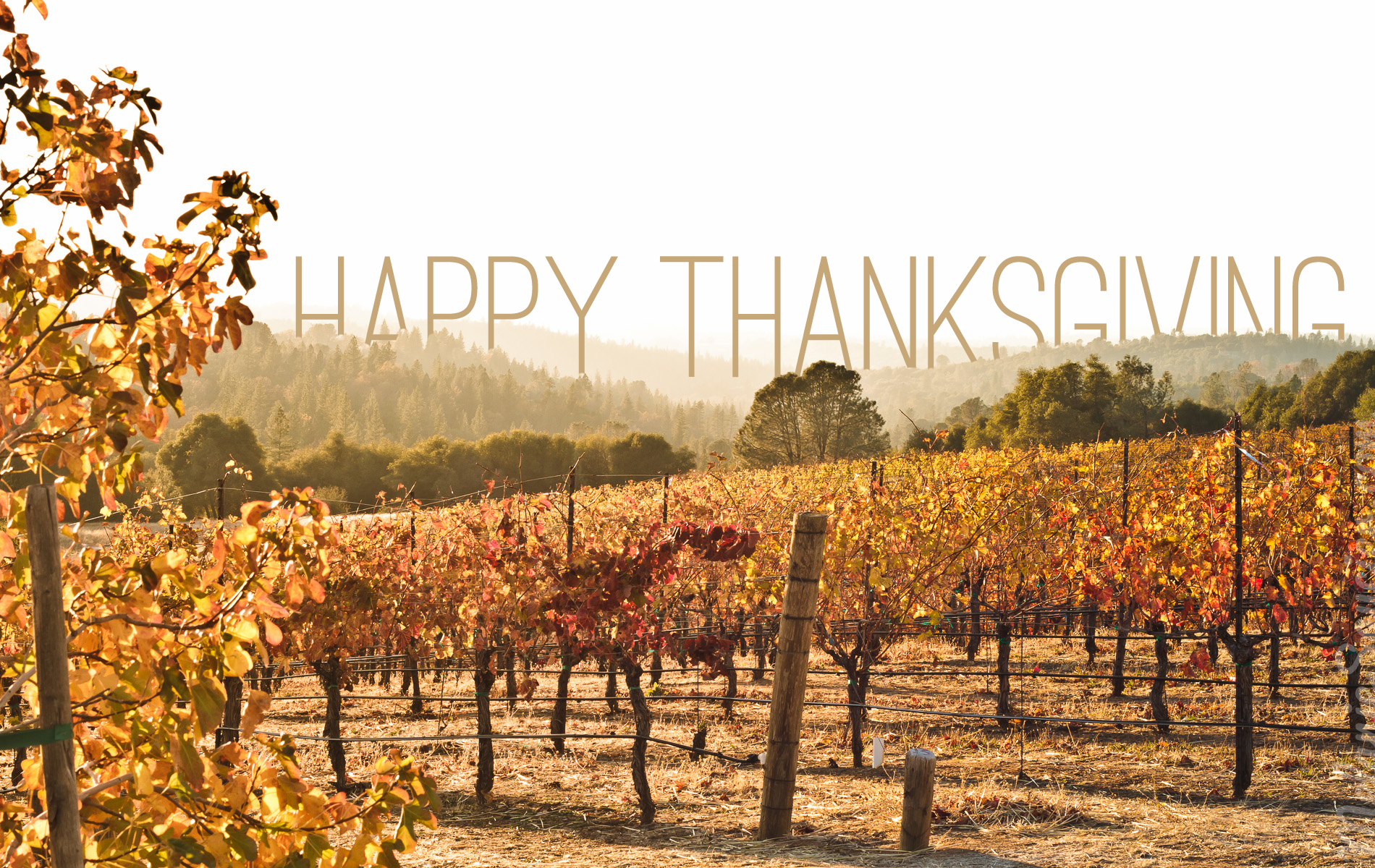 ThanksGiving_Winery_1900x1200_T