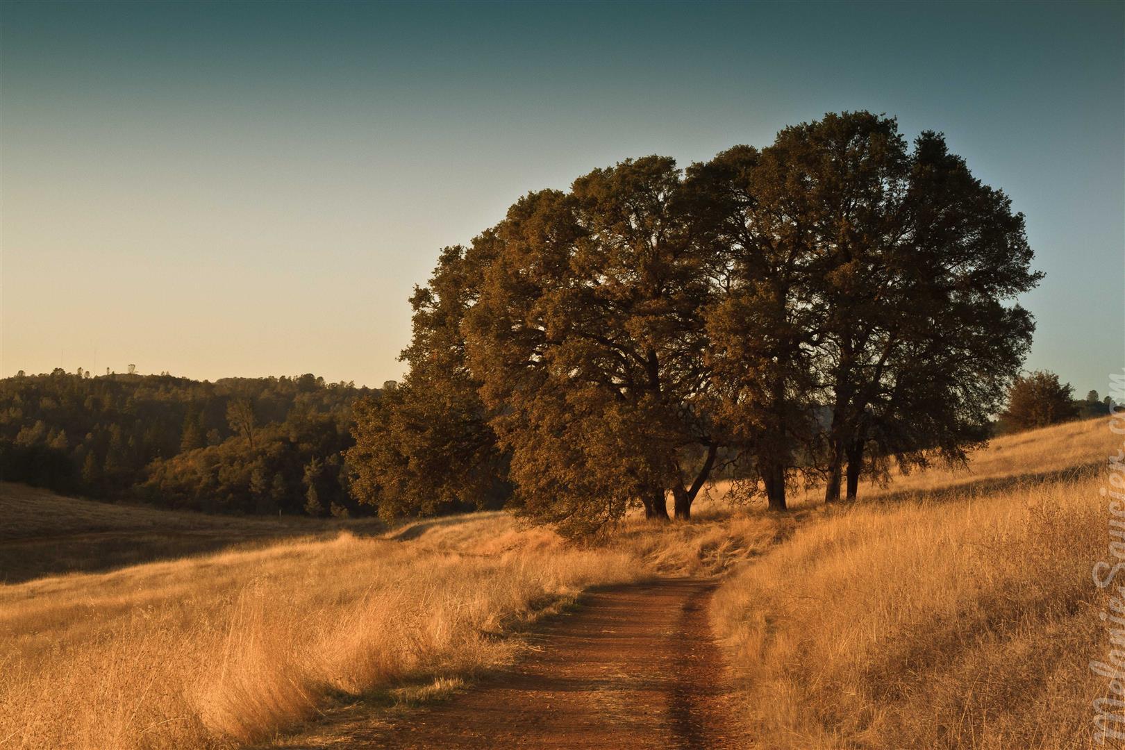 Cronan Ranch-29 (Large).jpg