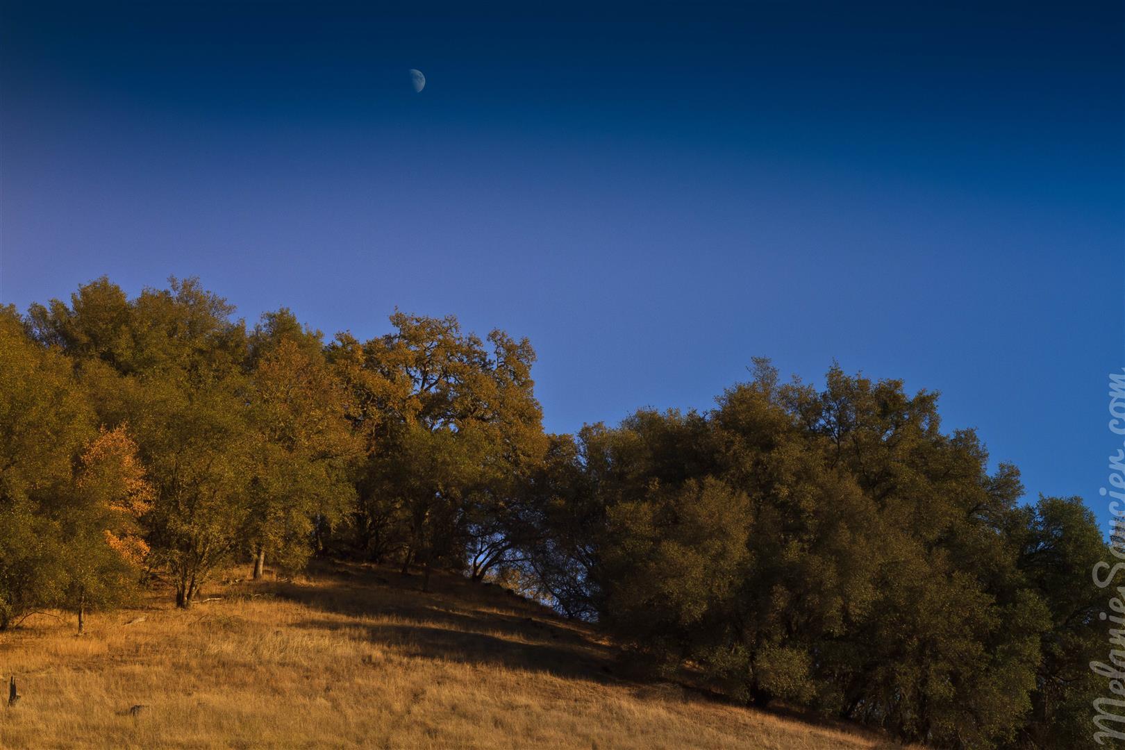 Magnolia Ranch Trail-8 (Large).jpg