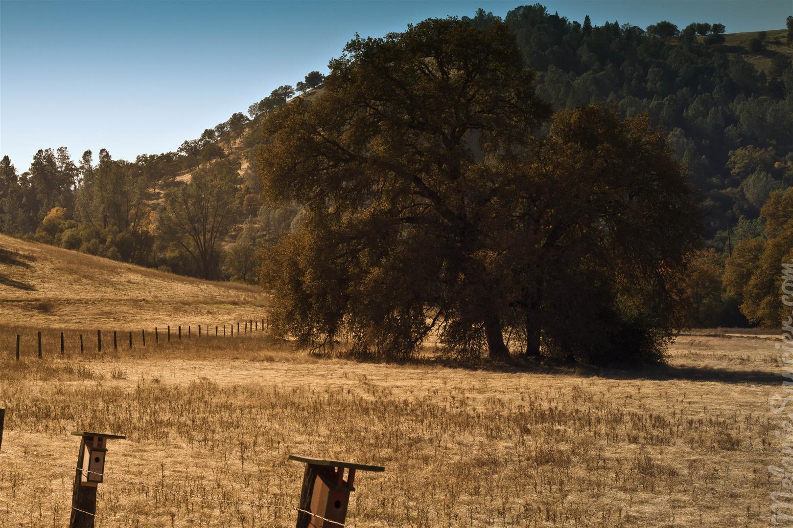 Magnolia Ranch Trail (Large).jpg