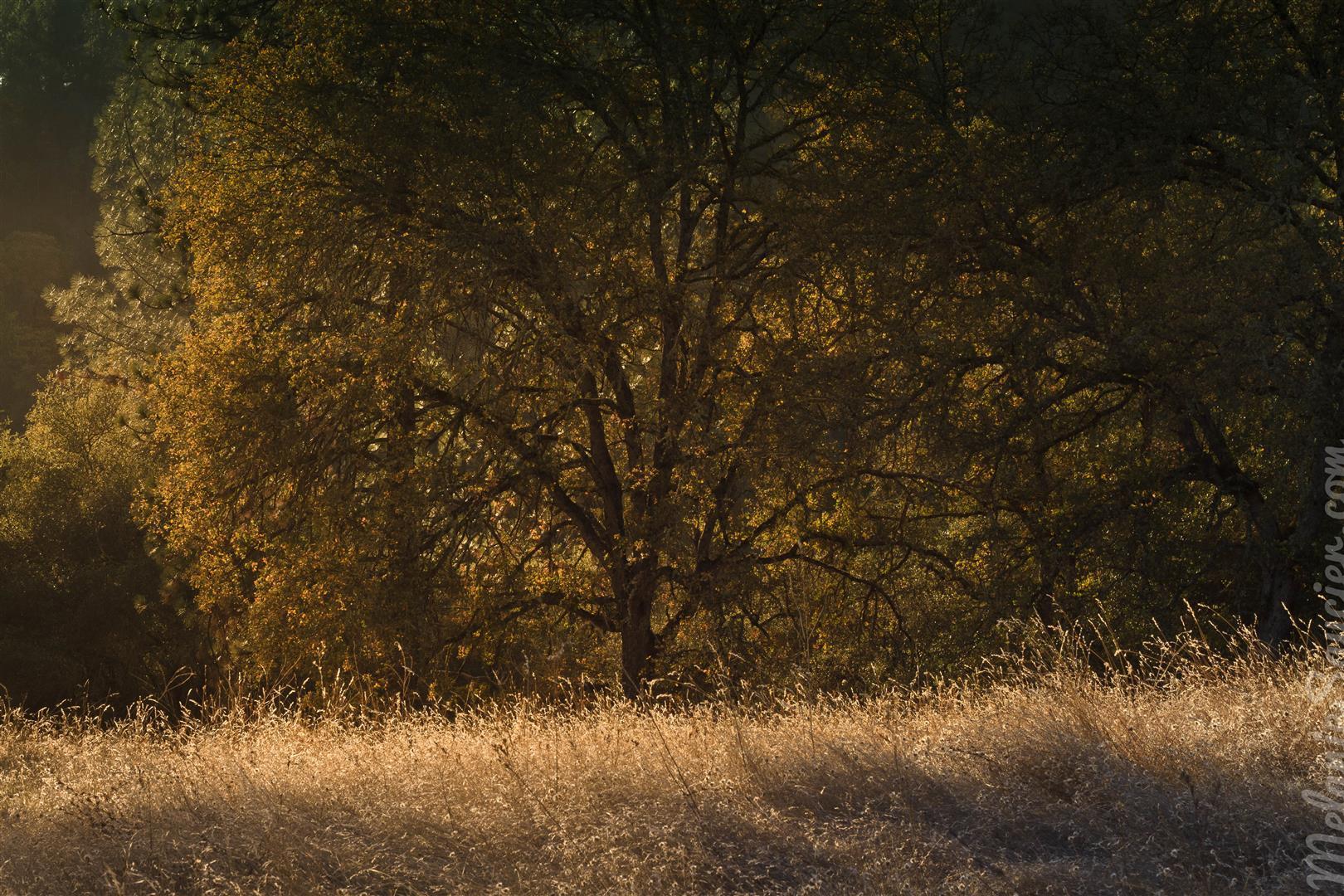 Magnolia Ranch Trail-7 (Large).jpg