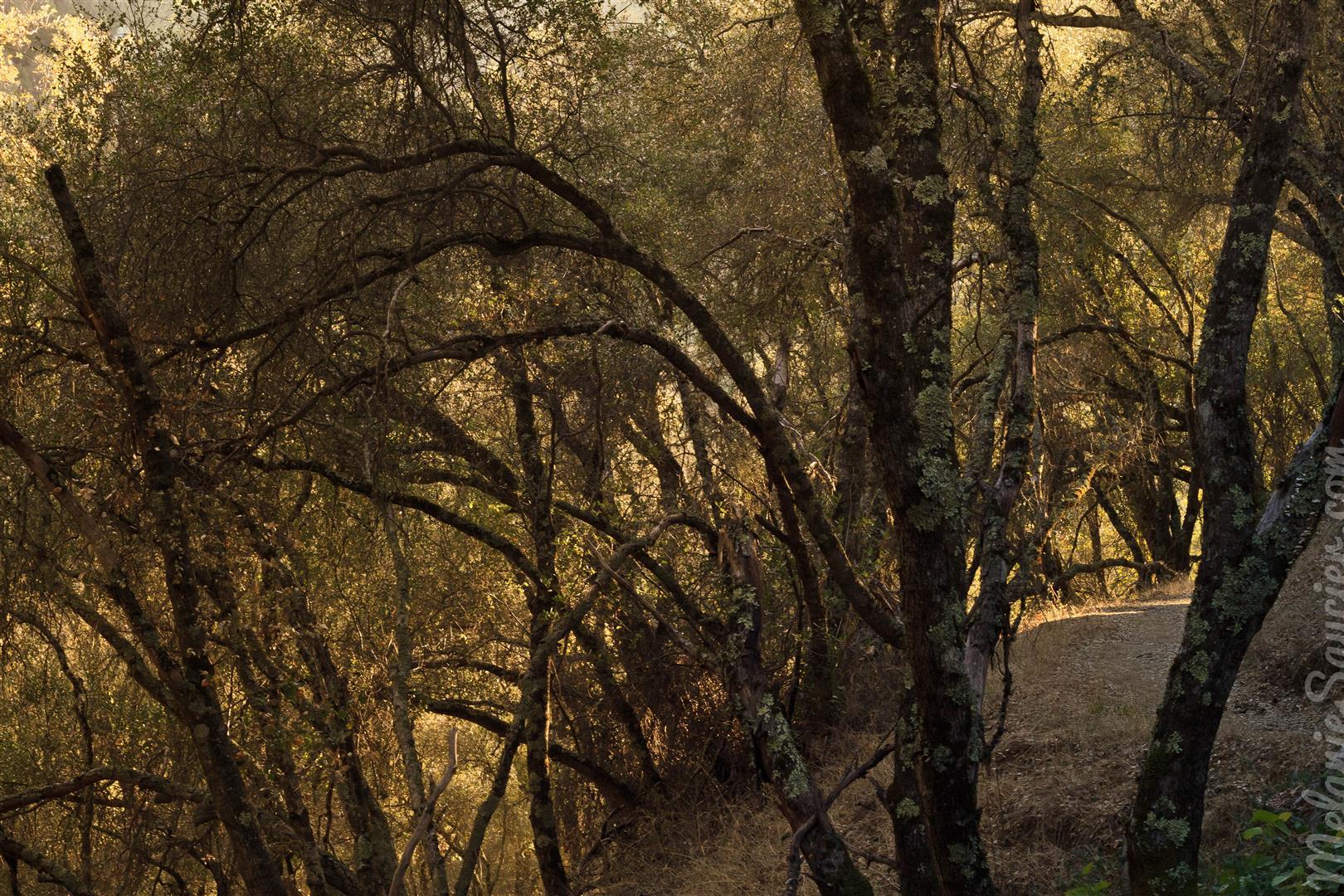 Magnolia Ranch Trail-10 (Large).jpg