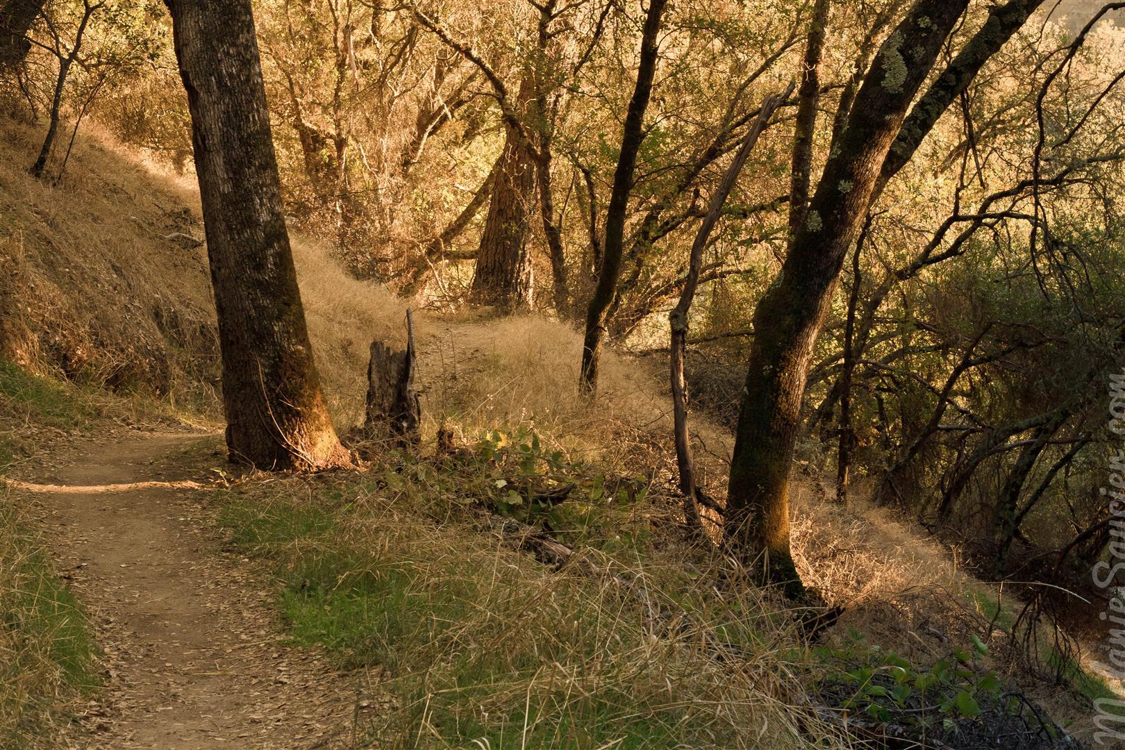 Magnolia Ranch Trail-9 (Large).jpg