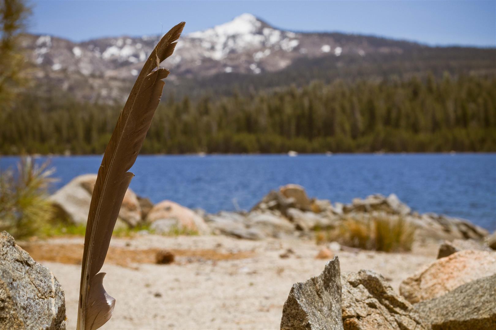 Loon Lake-9 (Large).jpg