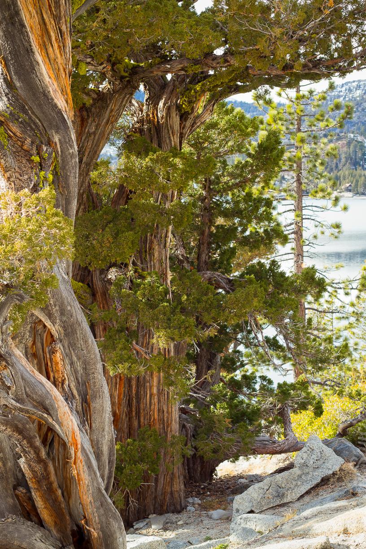 Echo_Lakes_Tahoe-20.jpg