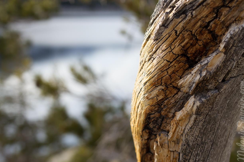 Echo_Lakes_Tahoe-26.jpg