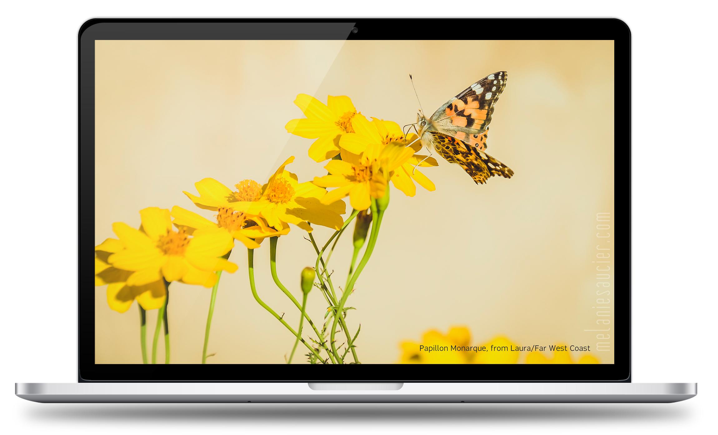 MacBook — 16:10