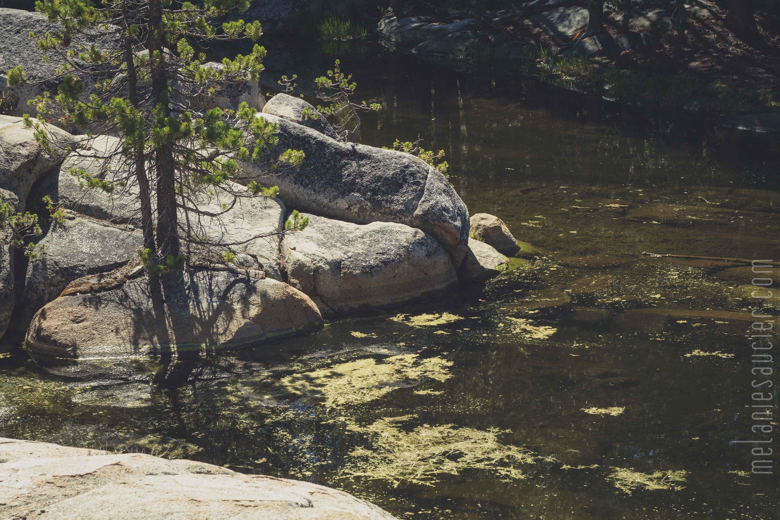 Utica_Reservoir_NorCal-79.jpg